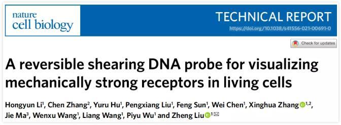 武大开发了一种新型分子荧光张力探针,实现活细胞的可视化研究