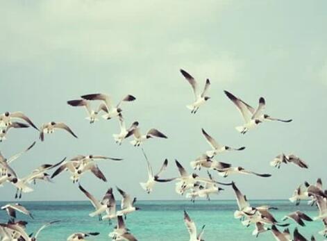 使用无人机和深度学习算法彻底改变对偏远海鸟群落的监测方式