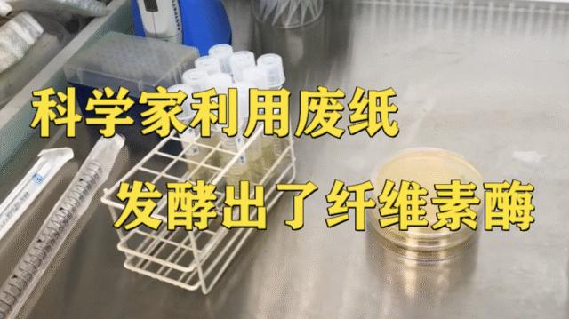 科学家利用废纸发酵出了纤维素酶,实现了废纸的低成本、高值化利用