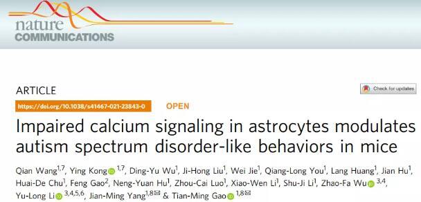 高天明团队揭示星形胶质细胞参与自闭症的发生