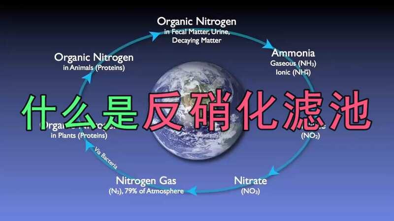 什么是反硝化滤池,反硝化滤池有什么作用?