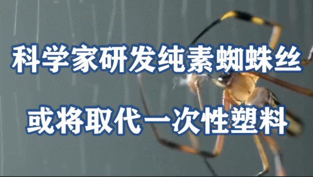 科学家研发纯素蜘蛛丝,或将取代一次性塑料制品