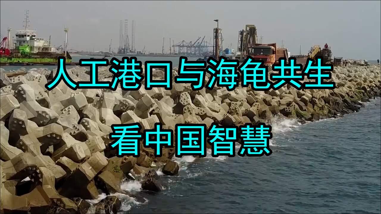 海龟与人工港口共生,中国智慧在加纳!