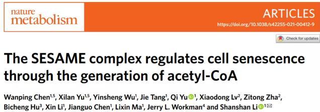 湖北大學揭示醋酸促進細胞衰老新機制,因可以破壞端粒異染色質結構