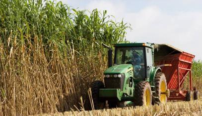 農業副產品有助于生產環保、可生物降解的塑料