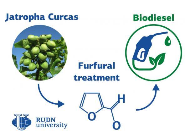 RUDN大學化學家從麻瘋樹植物中合成生物柴油