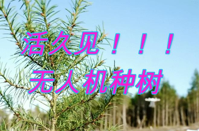活久见!用无人机种树比工人快10倍,成本比传统植树方法便宜80%