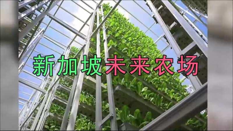 比进口的蔬菜价格还能贵2毛钱,垂直农场蔬菜有什么秘密?