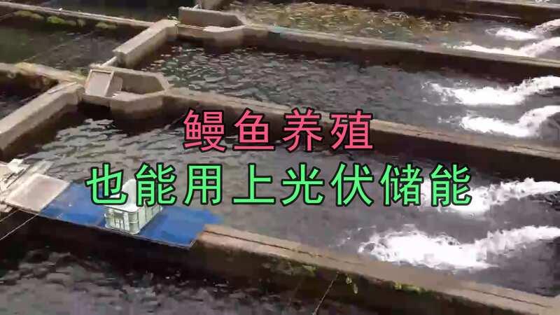 鰻魚養殖也能用上光伏儲能,可以解決養殖場90%以上的供電需求
