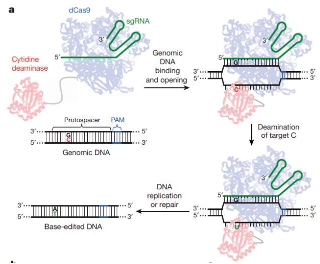 干貨大放送!盤點可以實現體內基因編輯高效精準調控的三大技術