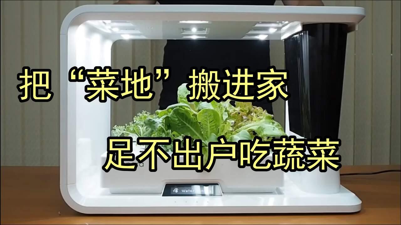 種菜黨的福利!在家就能種菜,還怕別人偷嗎