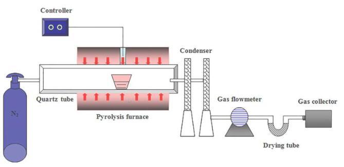 变废为宝!研究人员将榛子壳转化为潜在的可再生能源