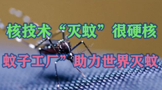 """核技术""""灭蚊""""!中山大学""""蚊子工厂""""助力世界灭蚊"""