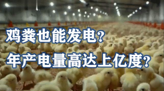鸡粪也能发电?年产电量高达上亿度?