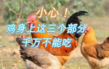 小心!鸡身上这三个部分,千万不能吃