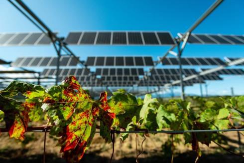 用農業光伏種植的葡萄釀出來的葡萄酒好喝嗎?
