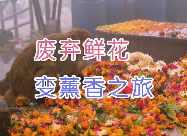 恒河治理靠他倆,廢棄鮮花變薰香