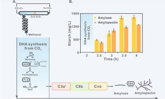 不靠植物造淀粉可能嗎?我國科學家首次從二氧化碳合成淀粉,節約90%以上耕地