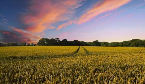 西澳大学制定了快速育种路线图,以加速建立粮食安全的快速育种和交付系统
