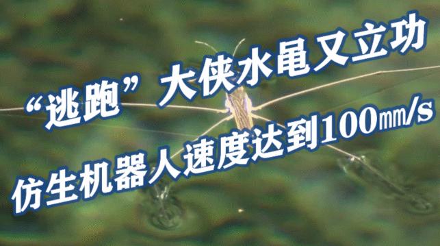"""""""逃跑""""大侠水黾又立功,仿生机器人速度达到100㎜/s"""